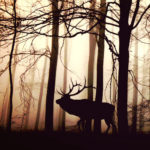 cerf foret seul