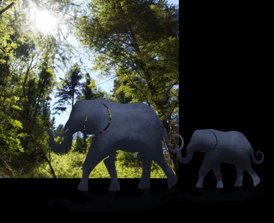 foret elephants